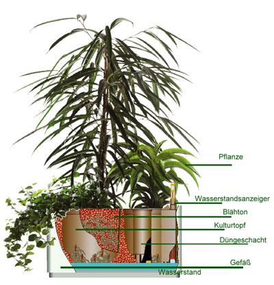 Gewächshaus Hydrokultur Pflanzen